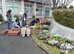 161109花の植え付け2