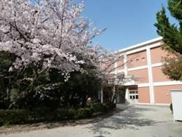 20180331桜2
