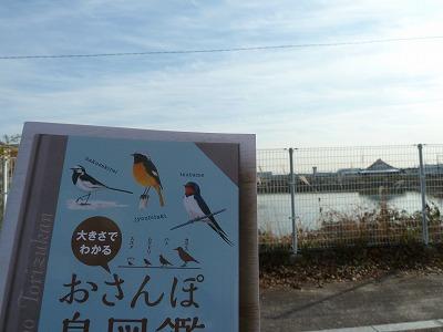 170118 bird1