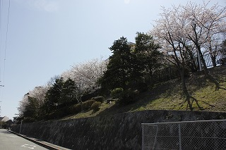 sakura00.jpg