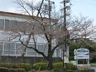 h280324-桜01.JPG