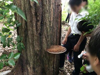 180610 アラカシの樹液とサルノコシカケ.JPG